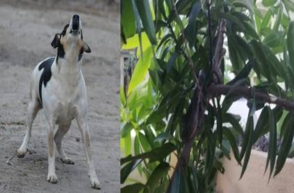 snake was found with the help of a pet dog in Pondicherry