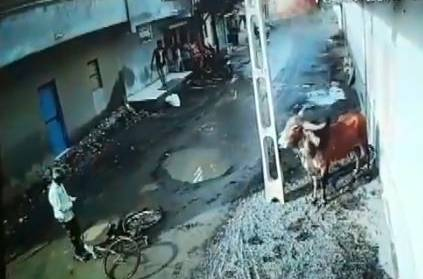 Two people injured in Gujarat after being attacked by a bull Video