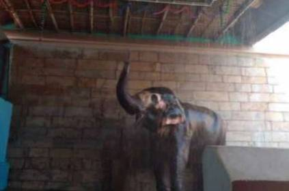 rs 1 lakh worth shower for trichy elephant To Tolerate heat