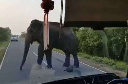 Elephant Stops Bus To Steal Bananas In Brazen Daylight Robbery