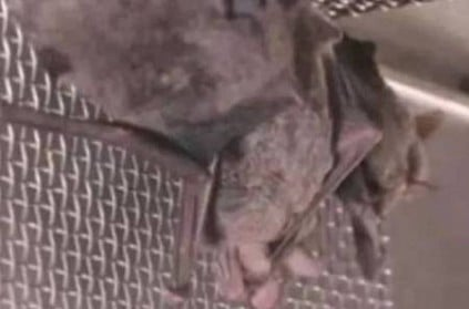 Live bats in cages kept in Wuhan Institute of Virology